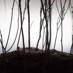 Shank's Mare miniature woods - photo by Ayumi Sakamoto